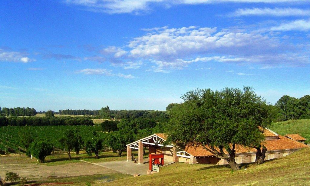 View_of_Al_Este_Bodega_y_Vinedos
