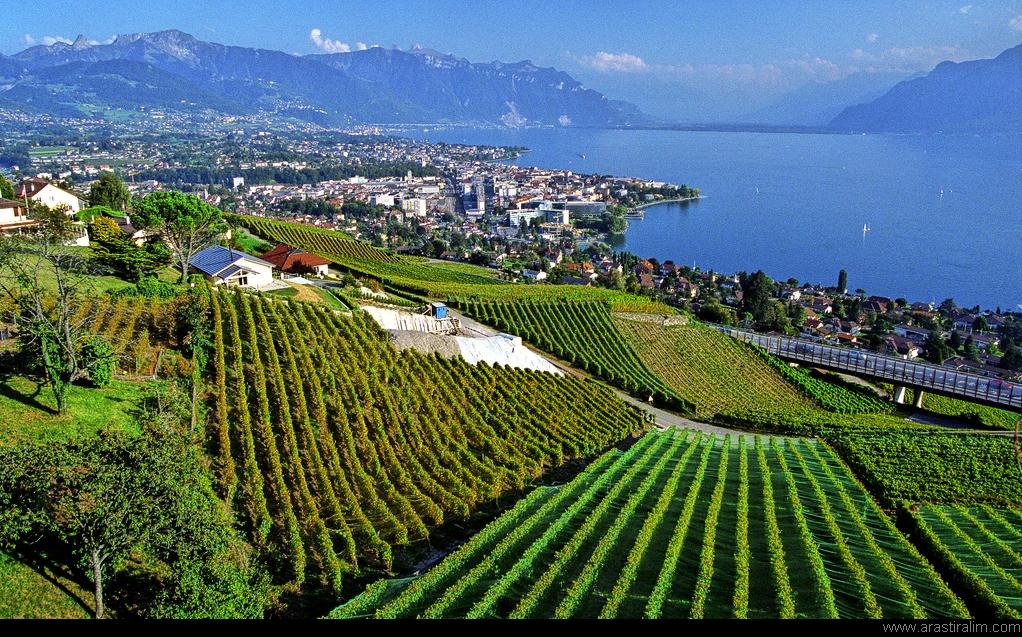 Wineries in Vienna