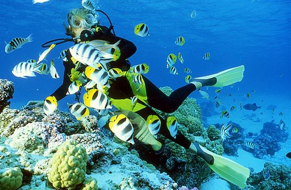 scubadiving in french polynesia