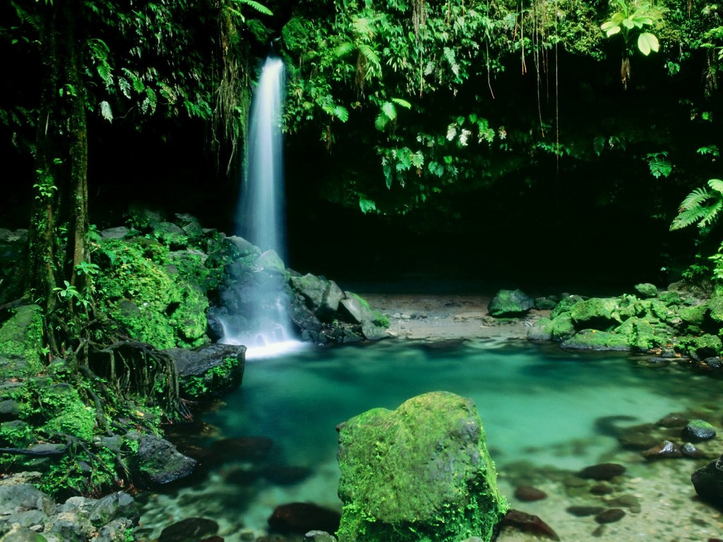 Emerald-Pool-Morne-Trois-Pitons-National-Park-Dominica-West-Indies