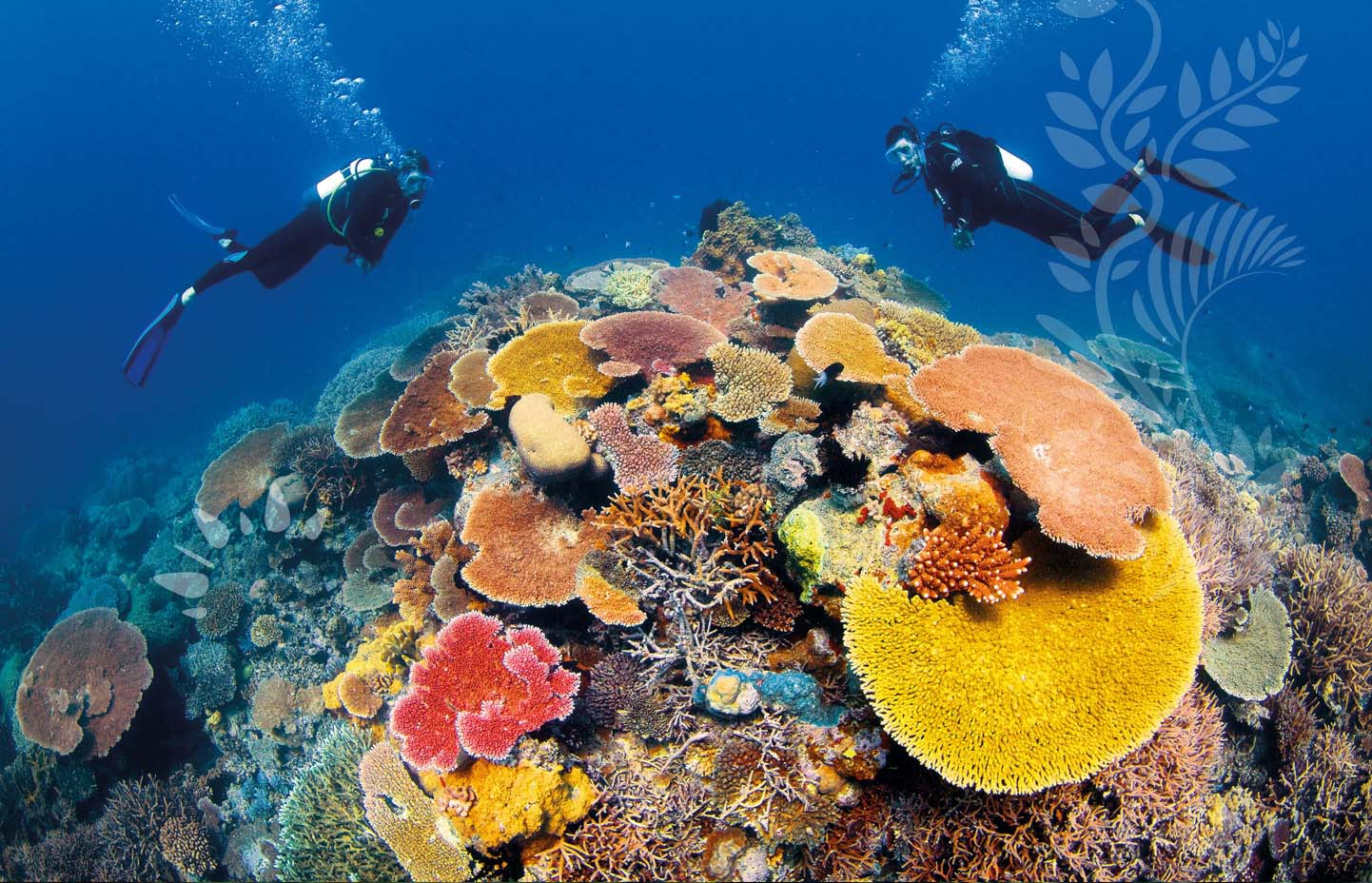 Great barrier reef tourist destinations - Best place to dive the great barrier reef ...