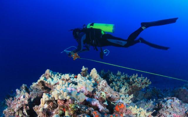 Fish Survey - Maro Reef