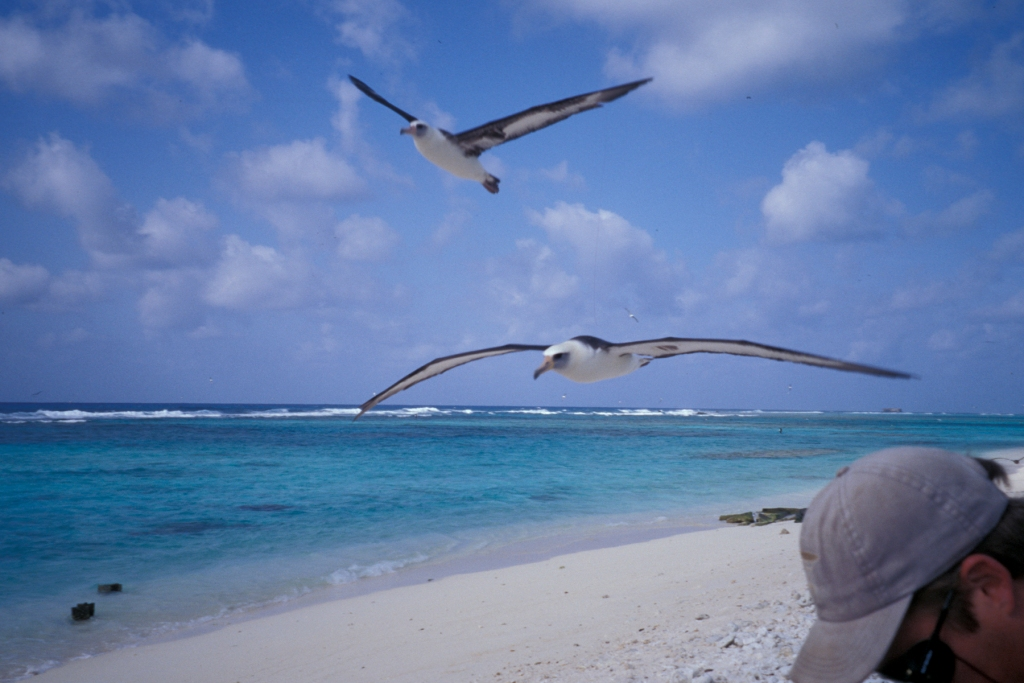 Lisianski Island birds