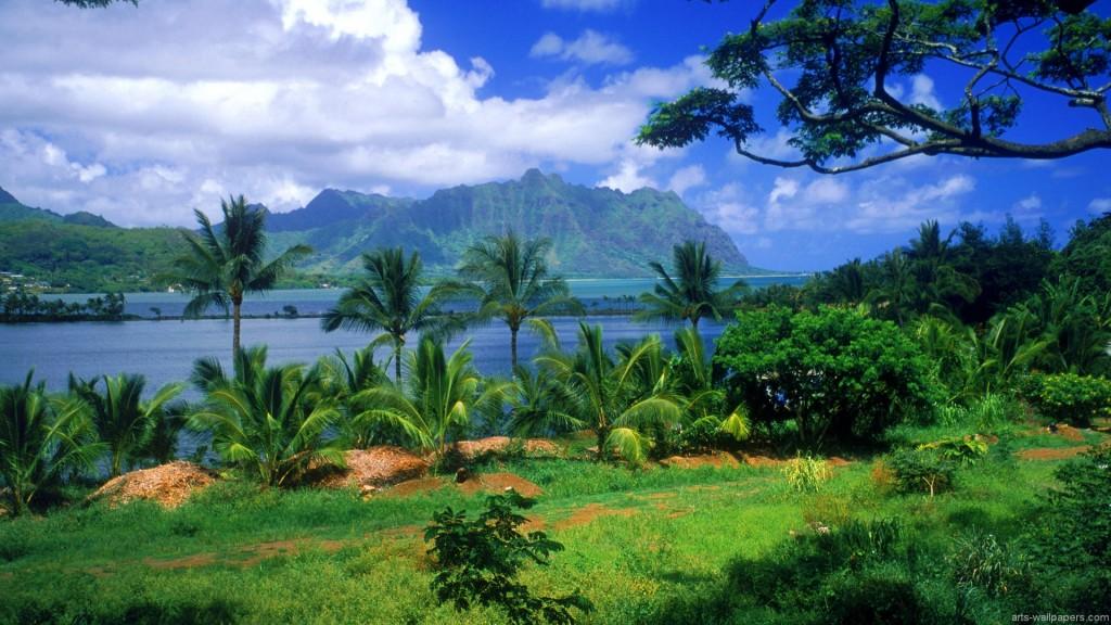 Oahu Tropical