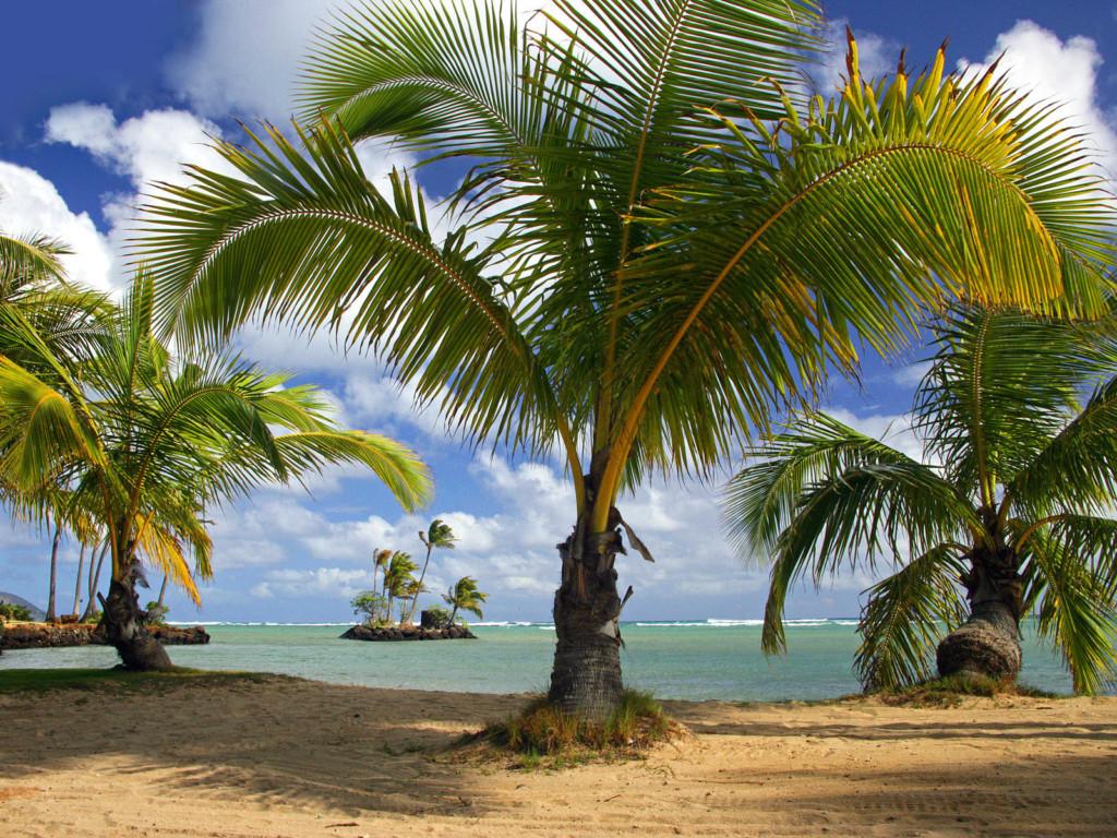 Wai'alae Beach Park, Island of Oahu, Hawaii