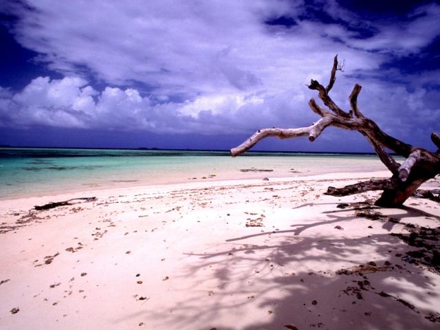 Laura_beach_n_tree_(170671778)
