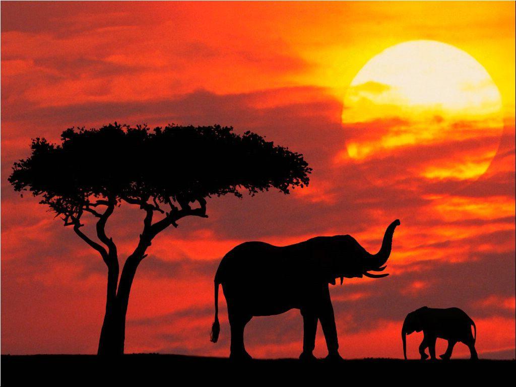 Maasai-Mara