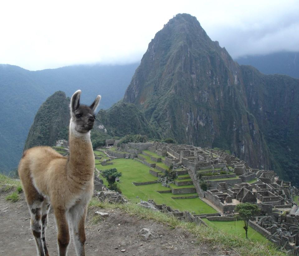 Machu-Picchu-lama