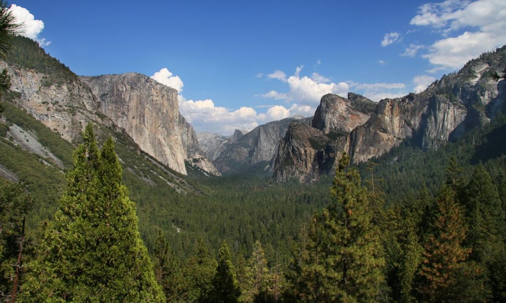 YosemitePark-woods