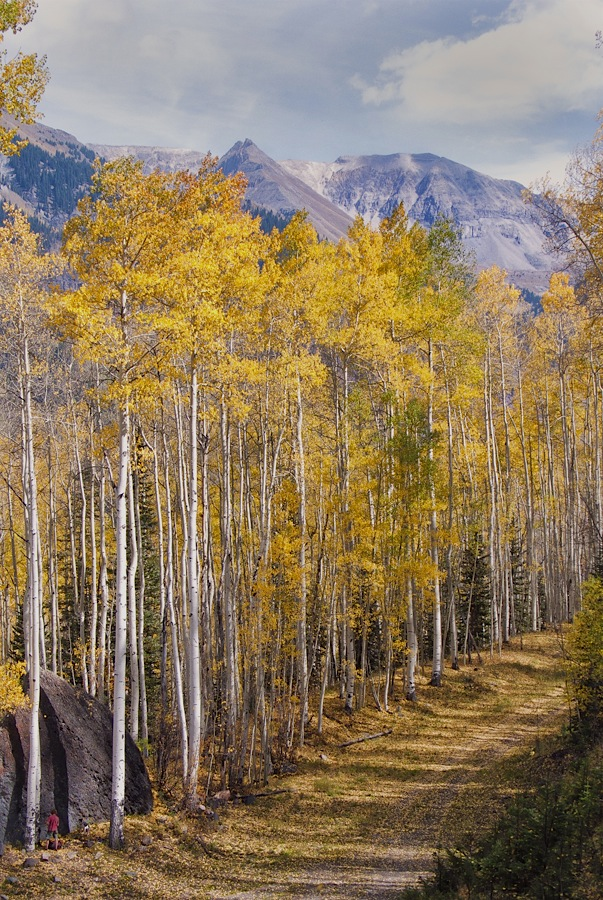 Fall_colors_at_Telluride_ski_area