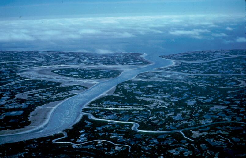 Brant_Nesting_Area_-_Yukon_Delta_Natio