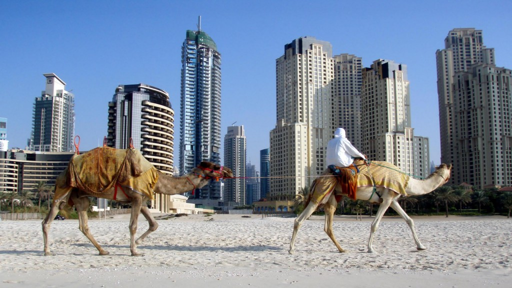 united-arab-emirates-and-camels