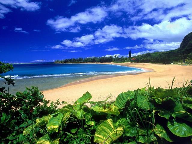 kauai-beach-image