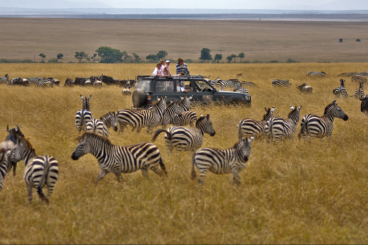 ExploreAmor-Serengeti-National-Park-Tanzania