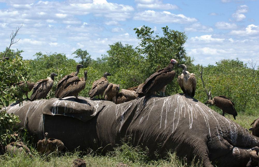 Kruger_National_Park_025
