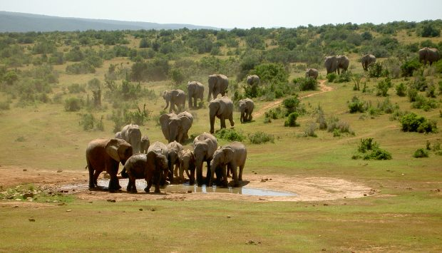 Kruger_National_Park_1