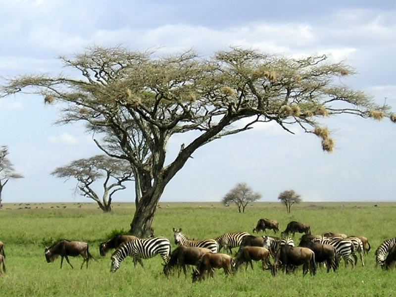 Serengeti National Park, Tanzania 2