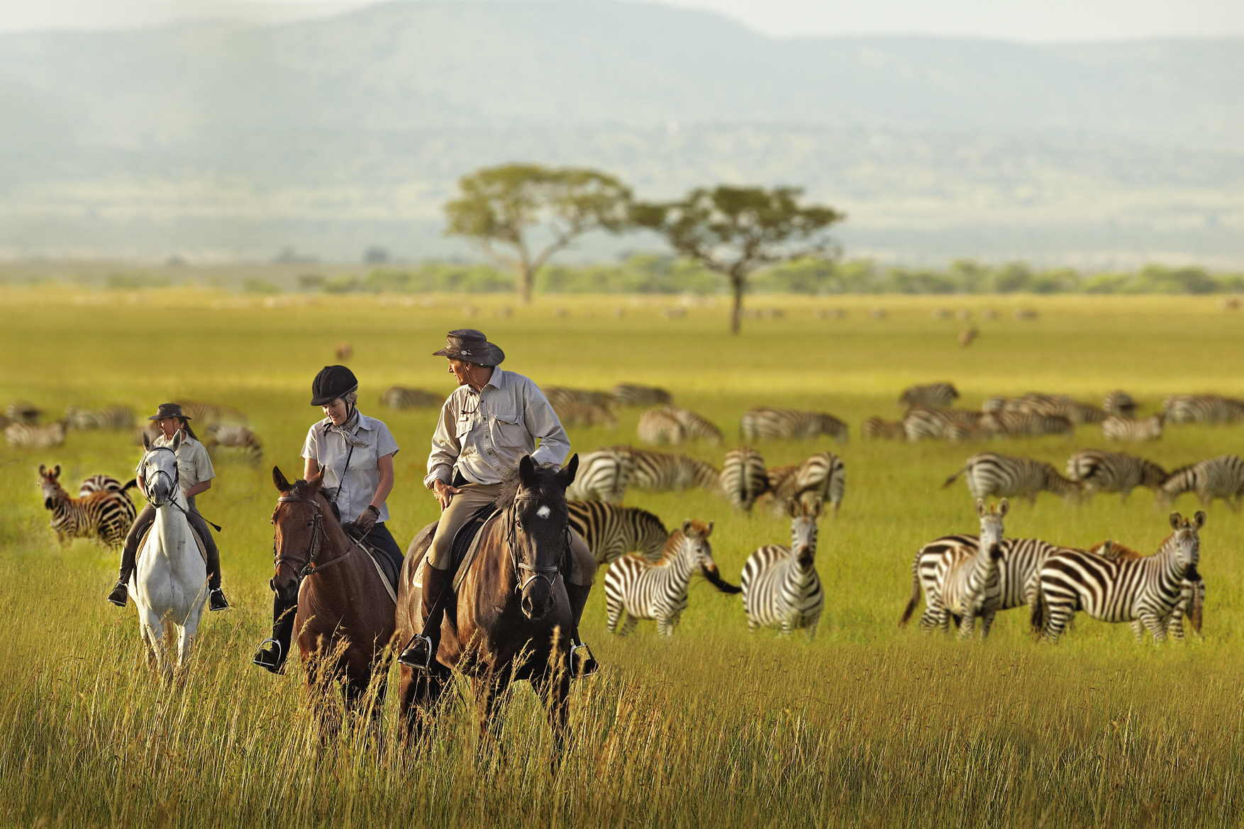 serengeti-national-park-zebras