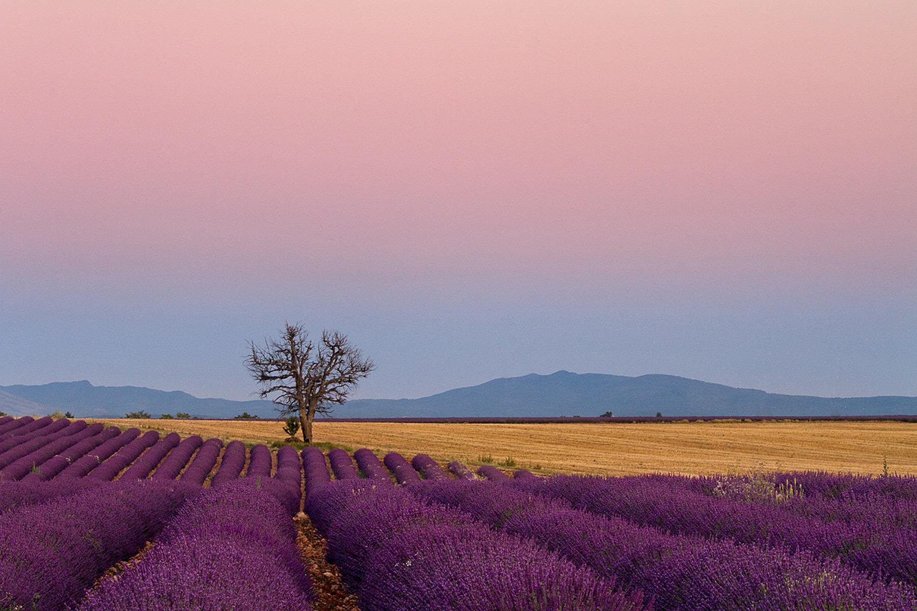 Evening Twilight - Valensole Plain - Provence - France