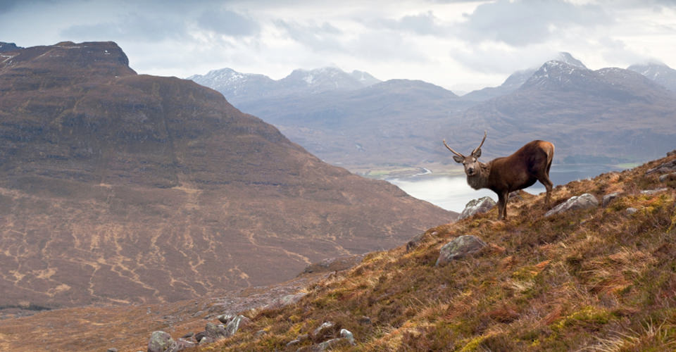 Scotland-1-elk-highlands