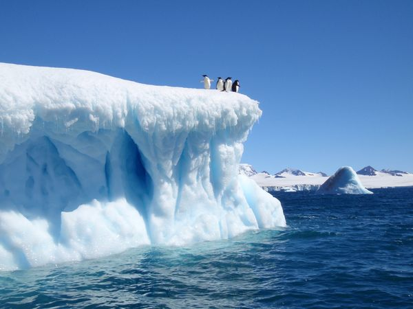 devil-island-iceberg-weddell-sea-adelie-penguins-antarctica