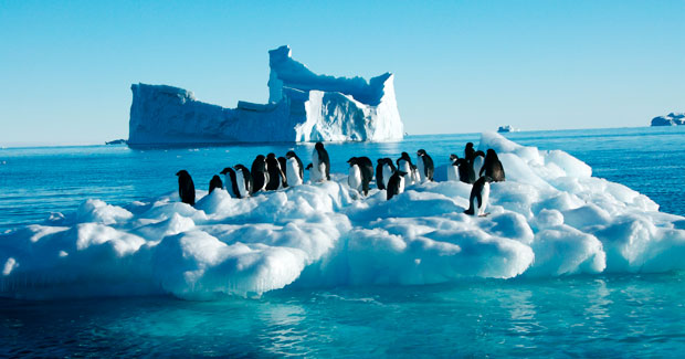 penguins_antarctica
