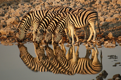 Namibia, South Africa 1