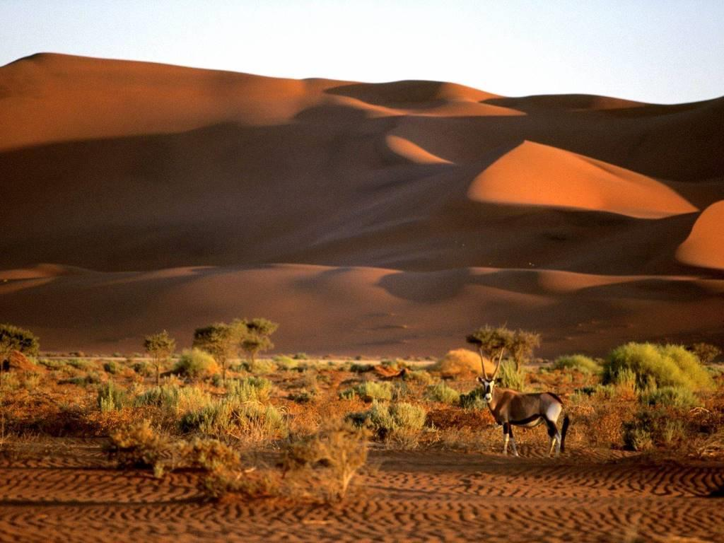 Oryx, Namibia, Africa
