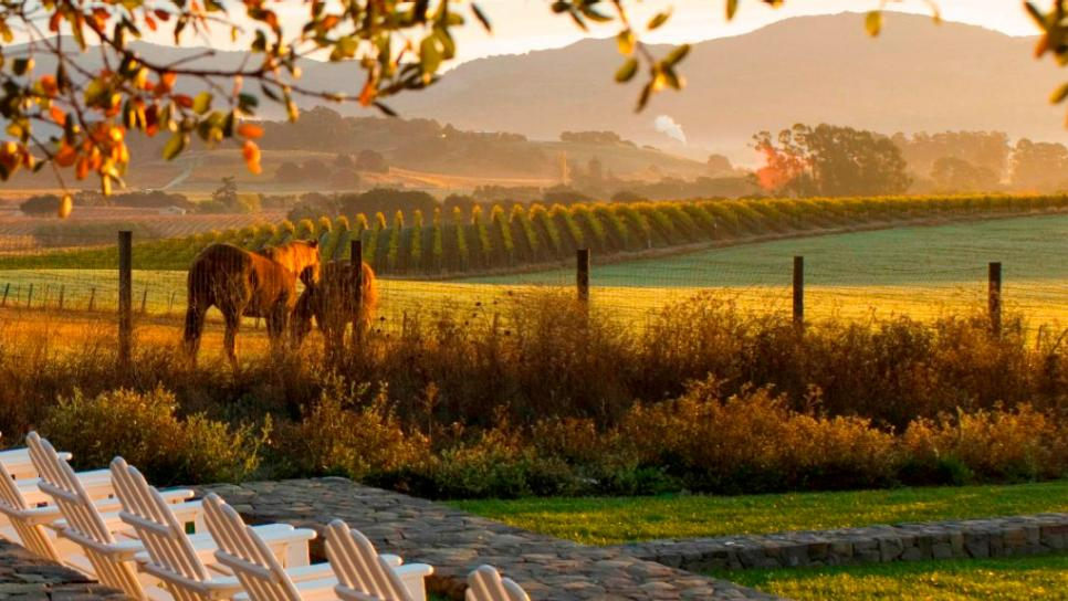the-carneros-inn-napa-valley-california